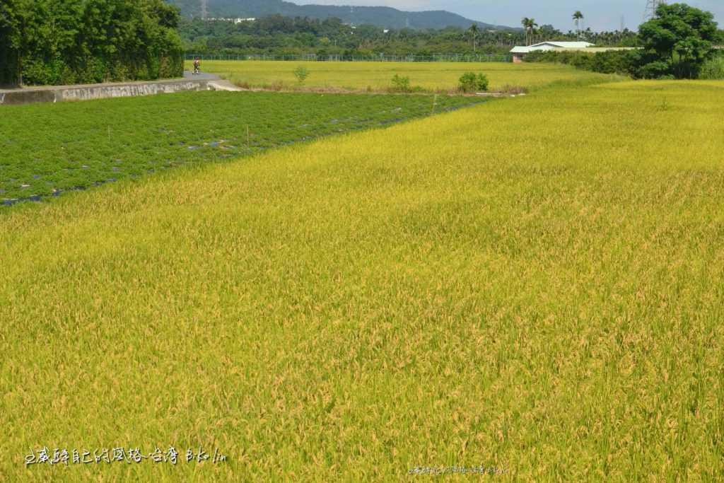 「鳳山溪」綠糕田野