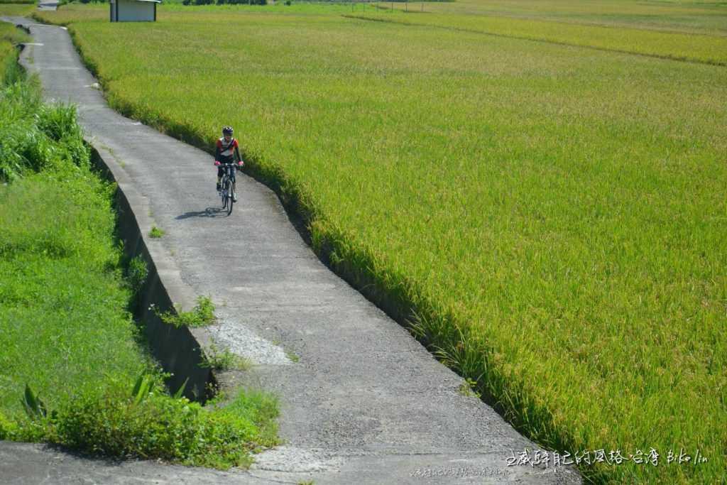 飛翔新埔田野風