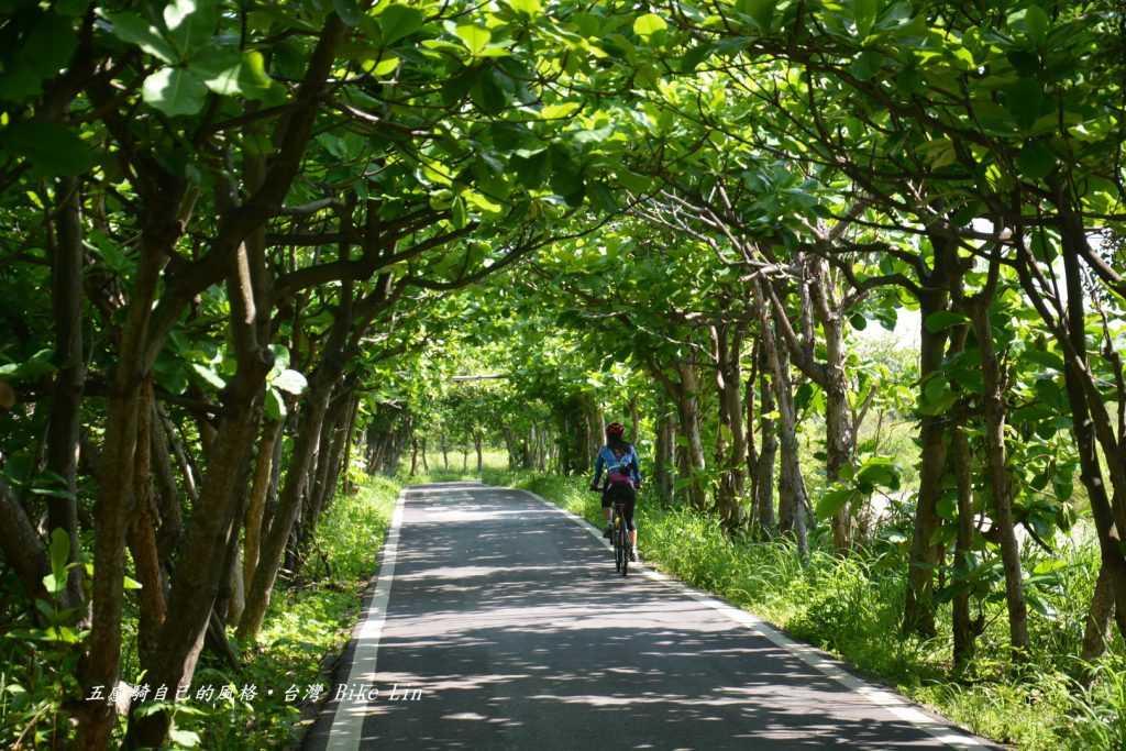 頂光的香山綠色隧道
