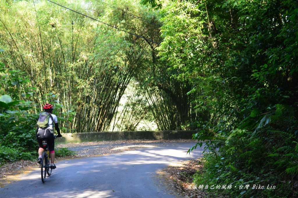 非常清幽大片「竹林綠色隧道」