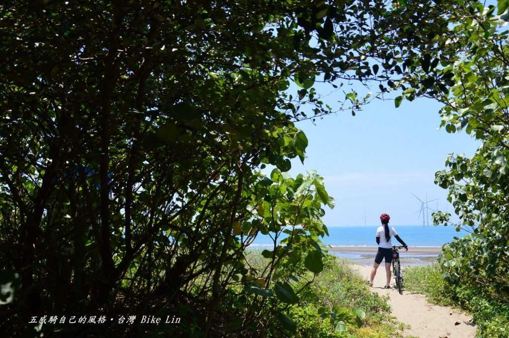 竹南濱海迷樣木麻黃林