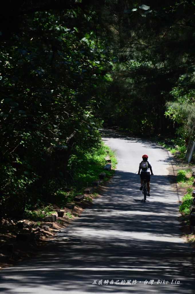 頂光下木麻黃林騎車的FU