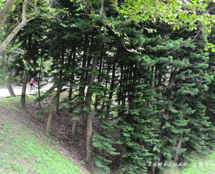 Day 7:苗栗南庄-三灣-頭份-新竹香山─ ─意外的旅程