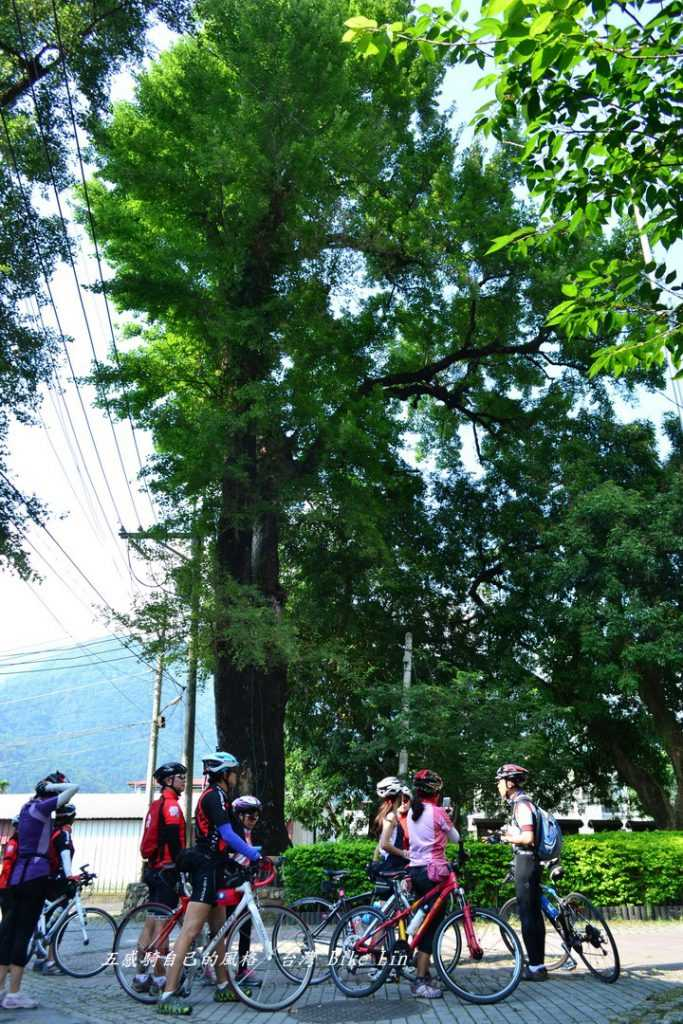楓香巨木群公園