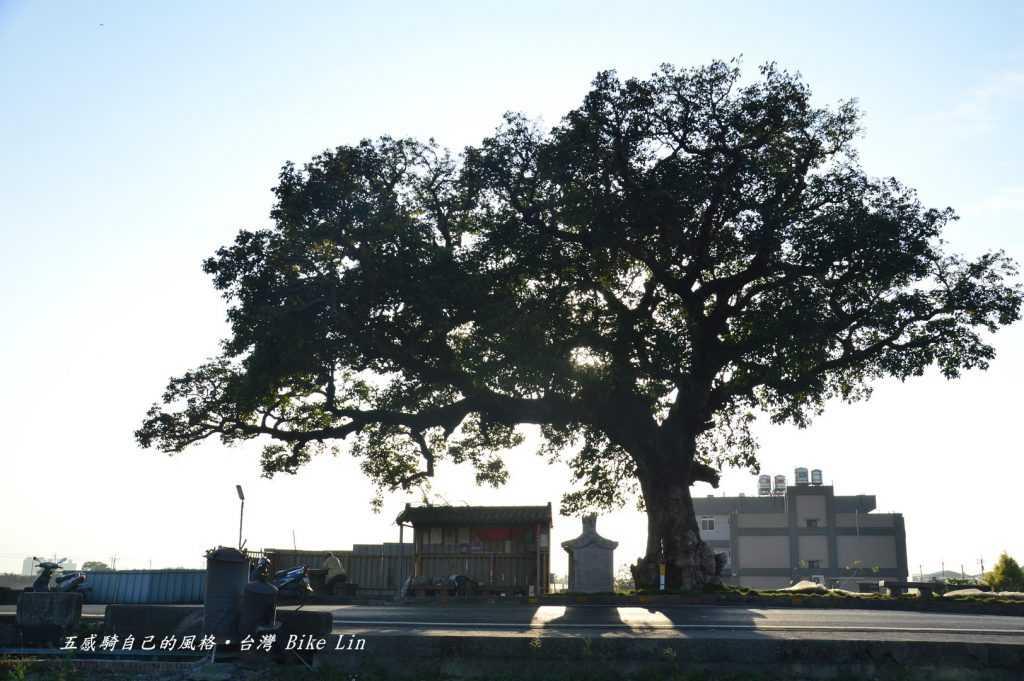 傳奇故事三春老樹