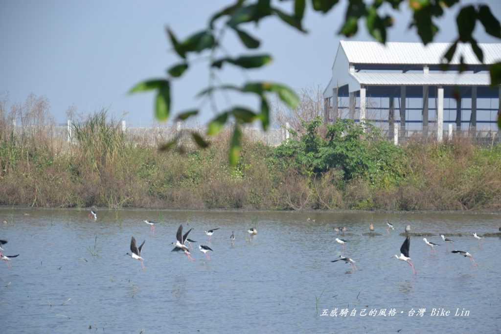 福興賞鳥區