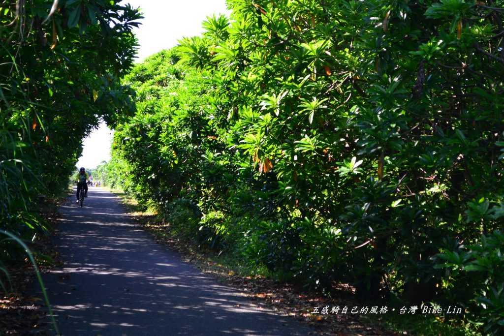 海檬果綠色隧道,綠光閃映夏蟬鳴奏曲
