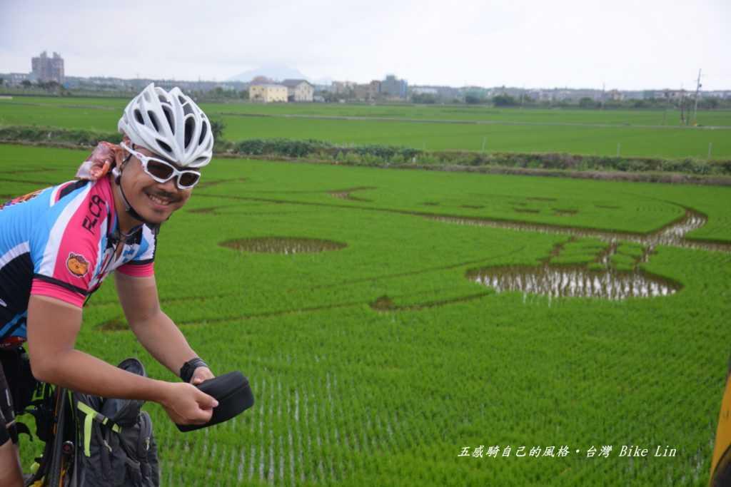 時潮村彩繪稻