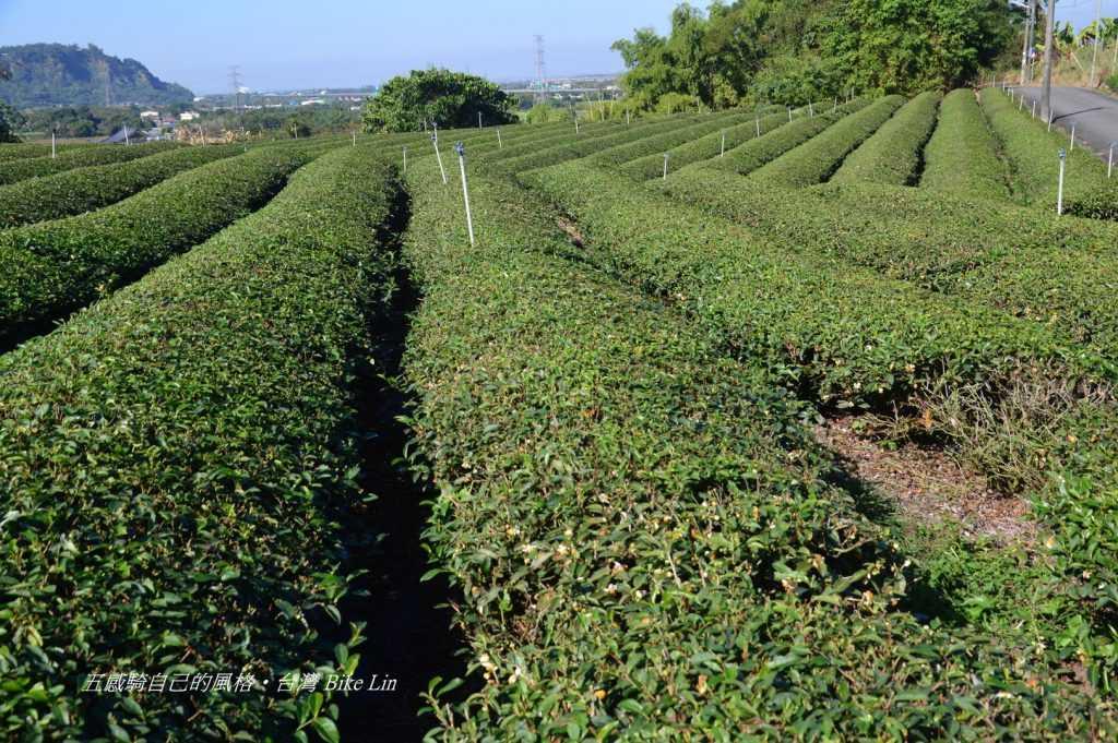 下坪茶園景觀