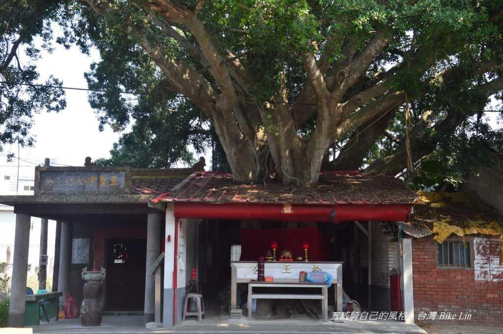 斗南將軍里三聖宮百年榕樹
