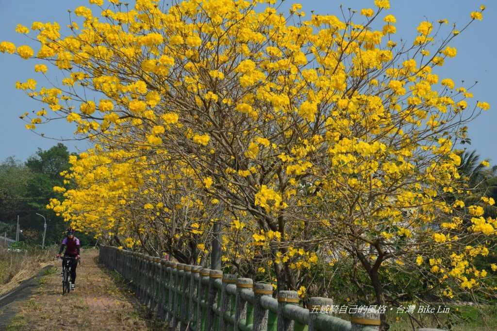 抒放三月鮮黃