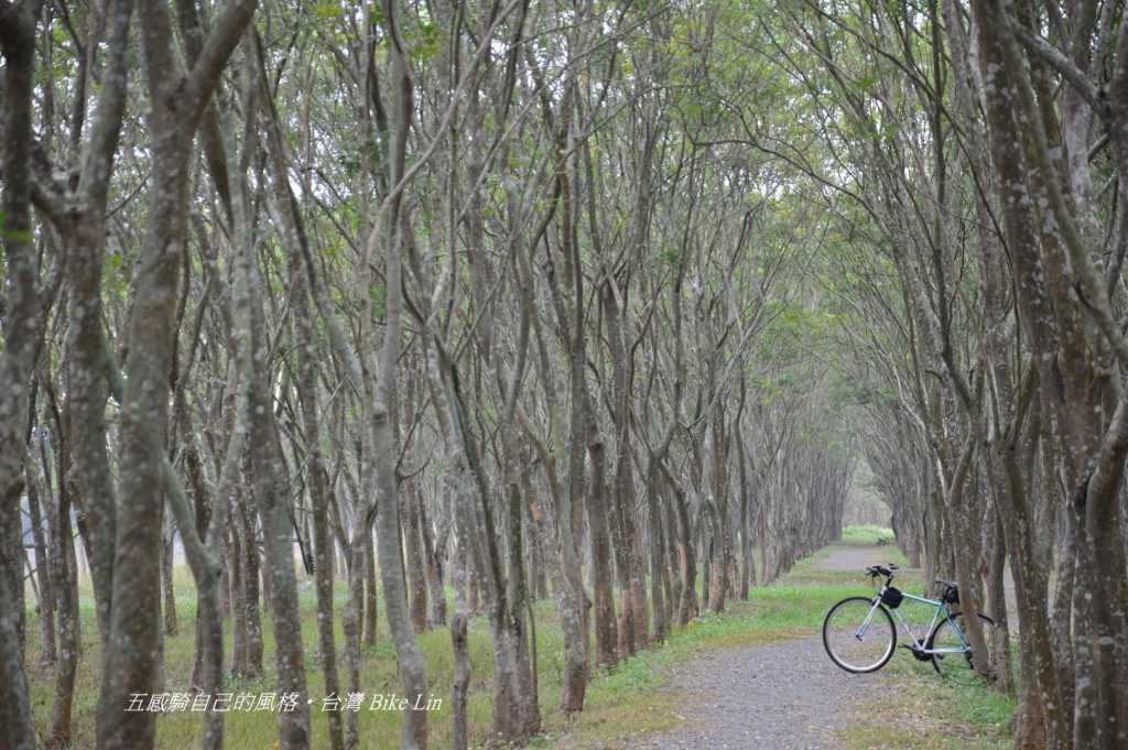 林後四林平地森林