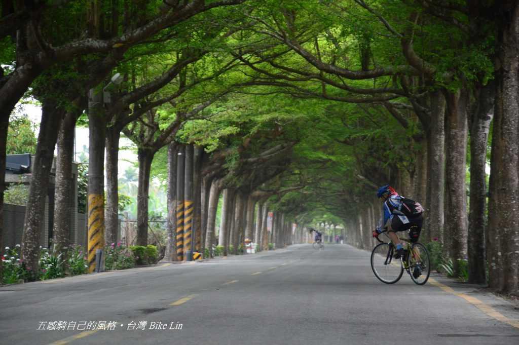 穿越初春「潮州綠色隧道」