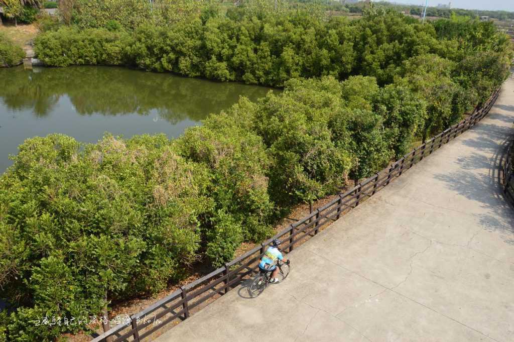 崎峰濕地觀景台上俯望綠