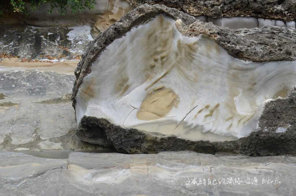 鮑魚殼岩石