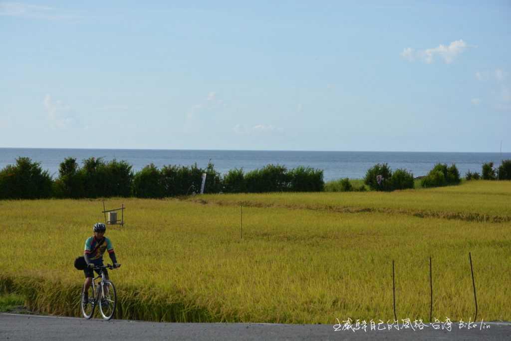 「港口村海祭場」迷你稻田